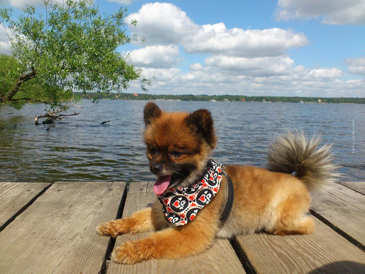 Basic equipment puppy & dog: 6 Must Haves! Food, bowl, leash, collar, blanket, ... - Checklist
