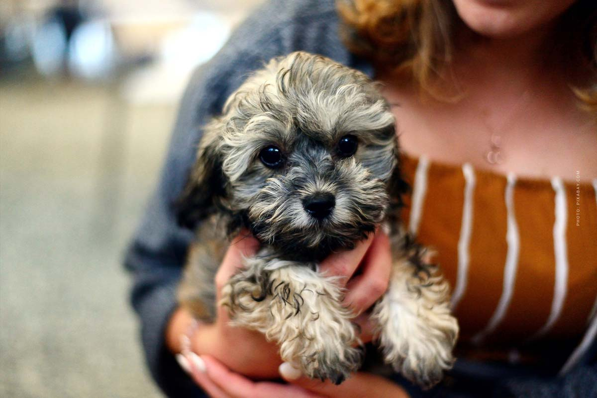 Buying a dog: Puppy moves in! Going for a walk, staying alone & Co. - Your first week